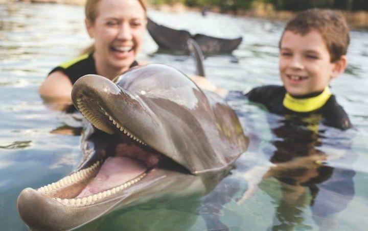 Discovery Cove, el primer parque acuático para personas con autismo